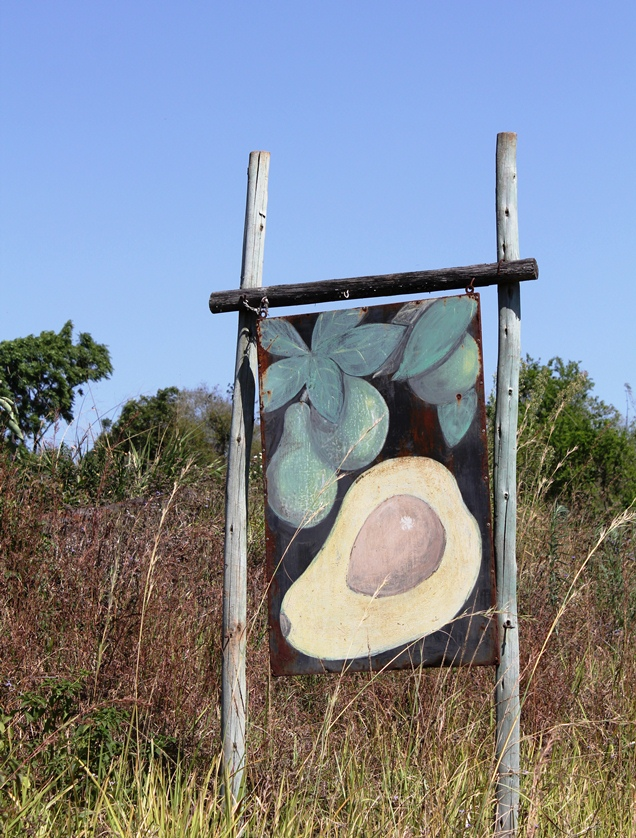 Mpumalanga is known for larger than life Avocados and Paw-Paws
